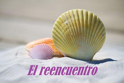 shells-792912_960_720_opt